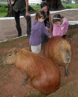 lustige bilder meerschweinchen - Lustige Meerschweinchen Fotos und Cavy Memes LOL
