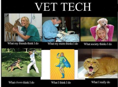 Veterinary Assistant source 4 me