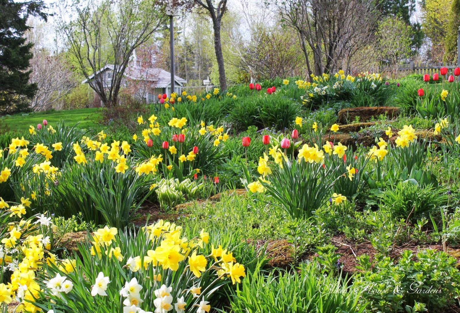 Aiken House Amp Gardens The Winners And Our Spring Garden