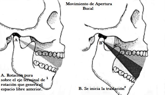 Oclusión en Odontología: Cinemática Mandibular