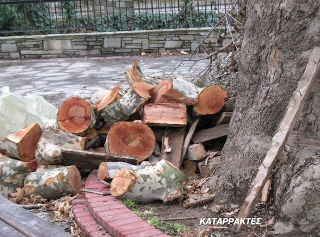 Ρημάξανε τα δέντρα στο πάρκο των καταρρακτών