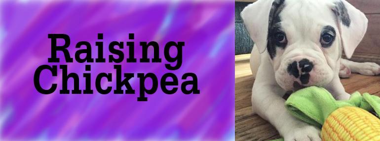 Raising Chickpea