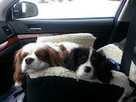 Cooper & Baxter