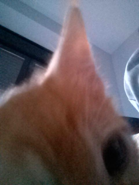 Snapcat - Autorretrato - gatos