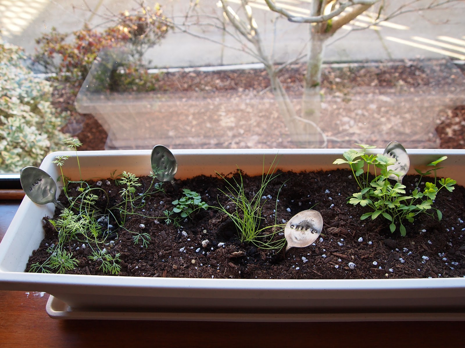 P B And J Eats Windowsill Herb Garden In 10 Simple Steps