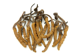 In the cordyceps sinensis will contain nitric oxide.
