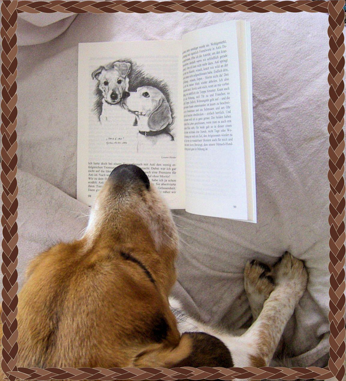 Wie Viele Arten Von Sofas Kennen Sie: Tierisches: Emma´s Neues Lieblingsbuch