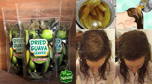 #DRIED GUAVA LEAVES Can Stop Hair Loss And Make It Grow Like Crazy! Click here..!!!