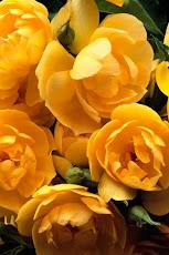 Le Rose Antiche