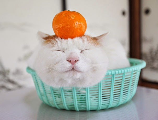 Shironeko Zen Master Cat Is The Happiest And Sleepiest Cat Ever