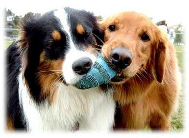 fotos animales domesticos - Fotografías en color de animales domésticos AllPosters es
