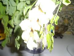 Sim, em minha casa cabe uma nova flor. E contudo é bem maior do que a minha casa.