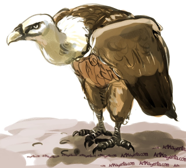 Griffon Vulture sketch painting. Bird art drawing by illustrator Artmagenta