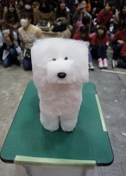 A Fortress Of Fur Trending Haircut For Dogs