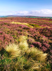 Ilkley Moor 2000 acres of open access land!