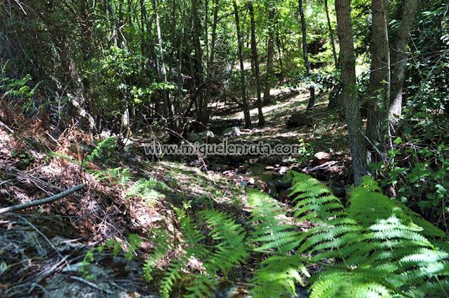 Bosque de Loreras