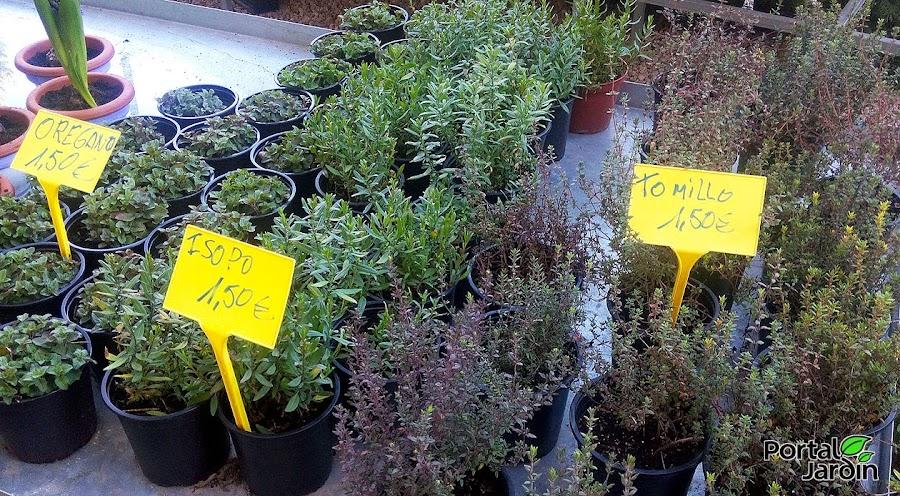 Plantas arom ticas for Jardin de plantas aromaticas