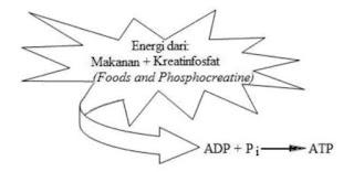 Resintesis ATP