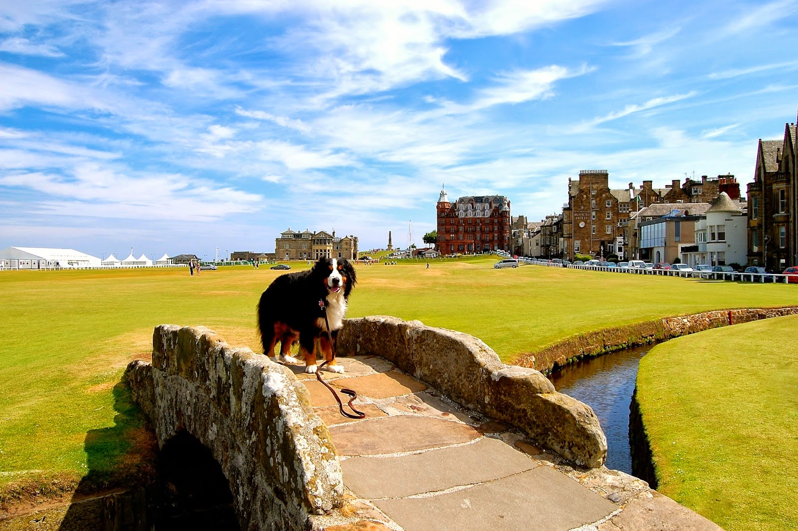 Mattie crossing the Swilcan Bridge on the Old Course in St. Andrews
