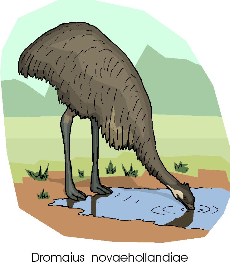 Dromaius Novaehollandiae Free Animal Clipart