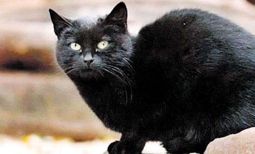 Misteri Pelik Dan Kucing Terkaya Di Dunia