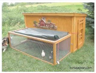 ayam kesayangan
