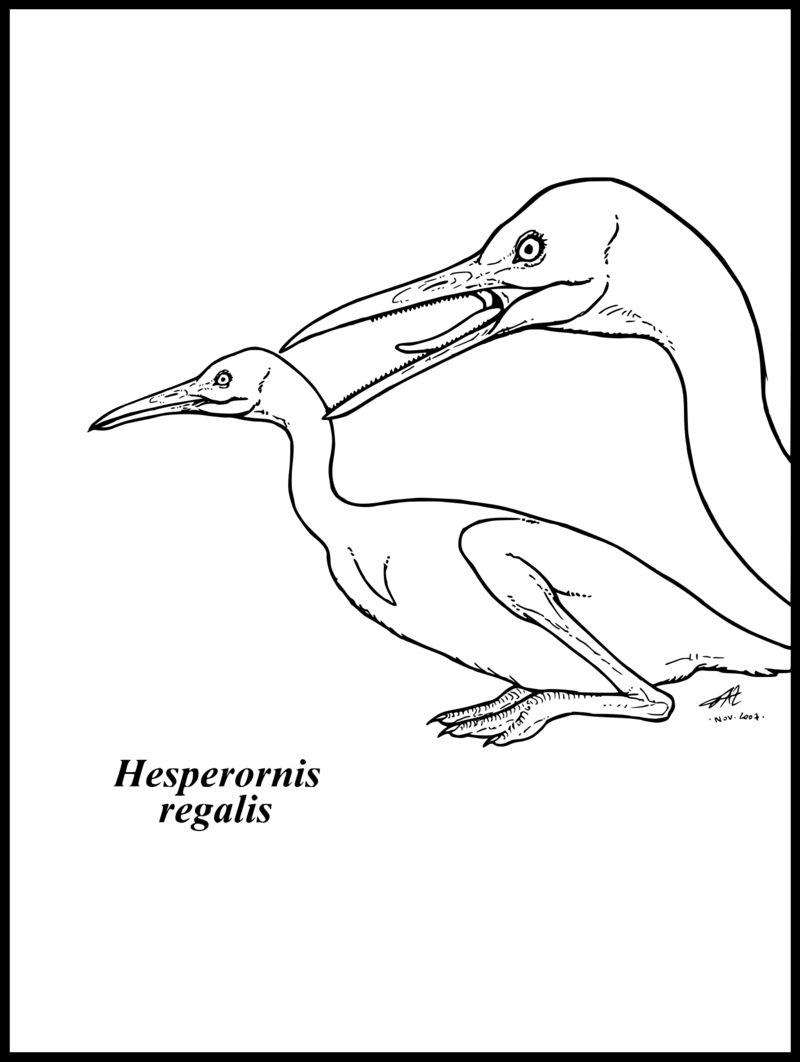 dinosaur of the week hesperornis coloring page coloring pages of