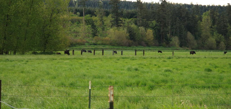 Our Beef in the Lush Fields