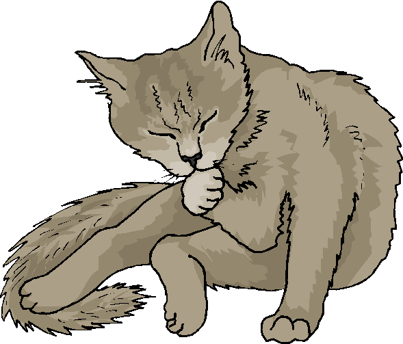 Funny Cat Wash His Face Free Animal Clipart