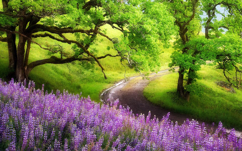 Resim manzara doğa dini resimleri galerisi