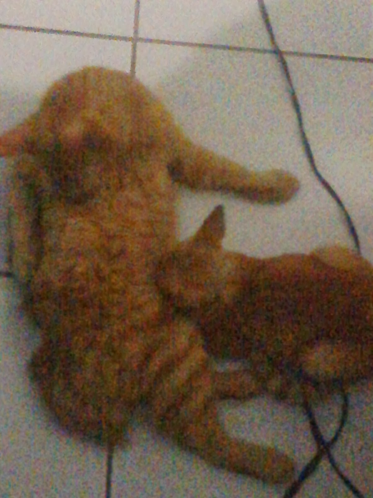 Kucing Yang Baik Hati