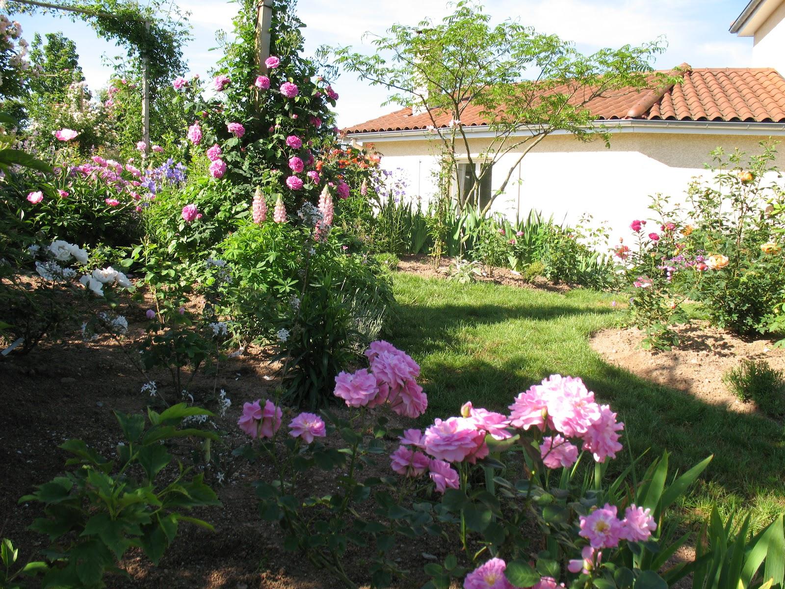 Roses du jardin ch neland rosier lavender lassie for Decoration jardin rosier