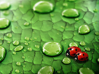 Lady Bug Wallpapers