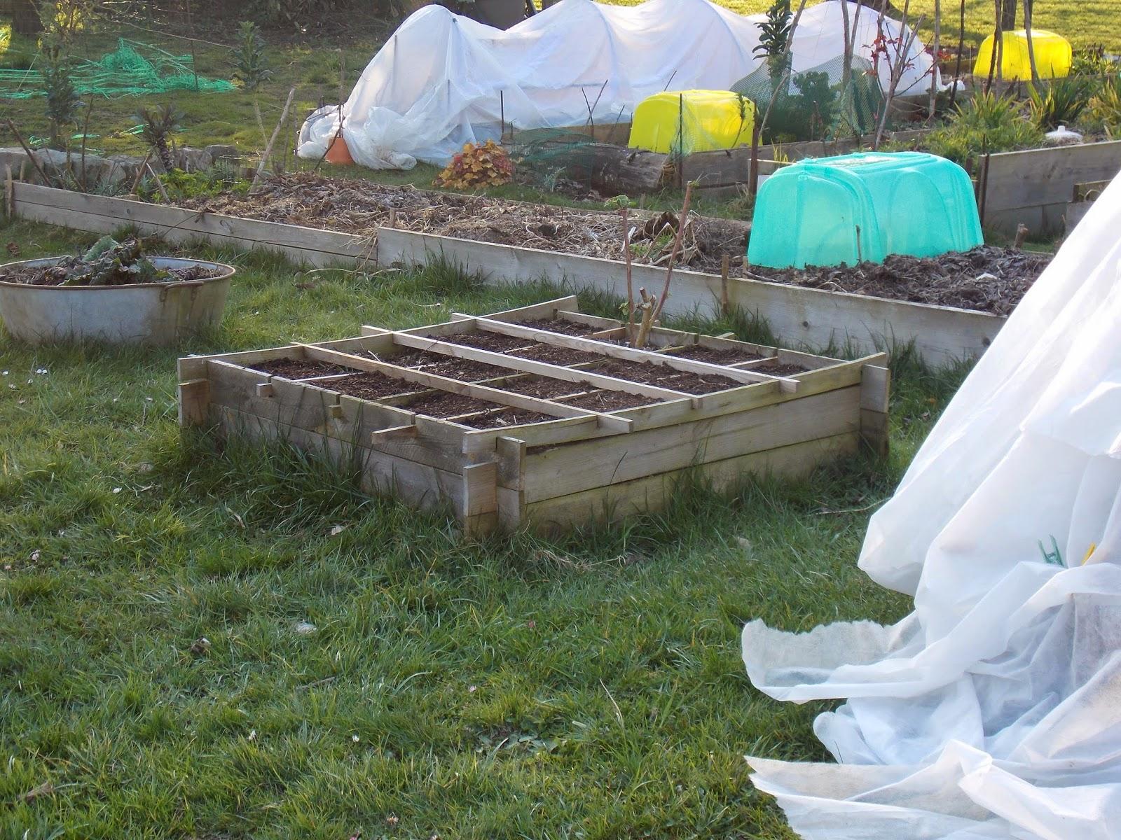 ecolo bio nature permaculture urbaine et jardinage bio premiers semis de l 39 ann e dans les. Black Bedroom Furniture Sets. Home Design Ideas