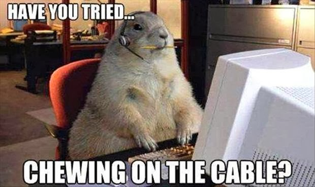 Funny Animal Wednesday Meme : Can we have a new witch ours melted weird animal wednesday