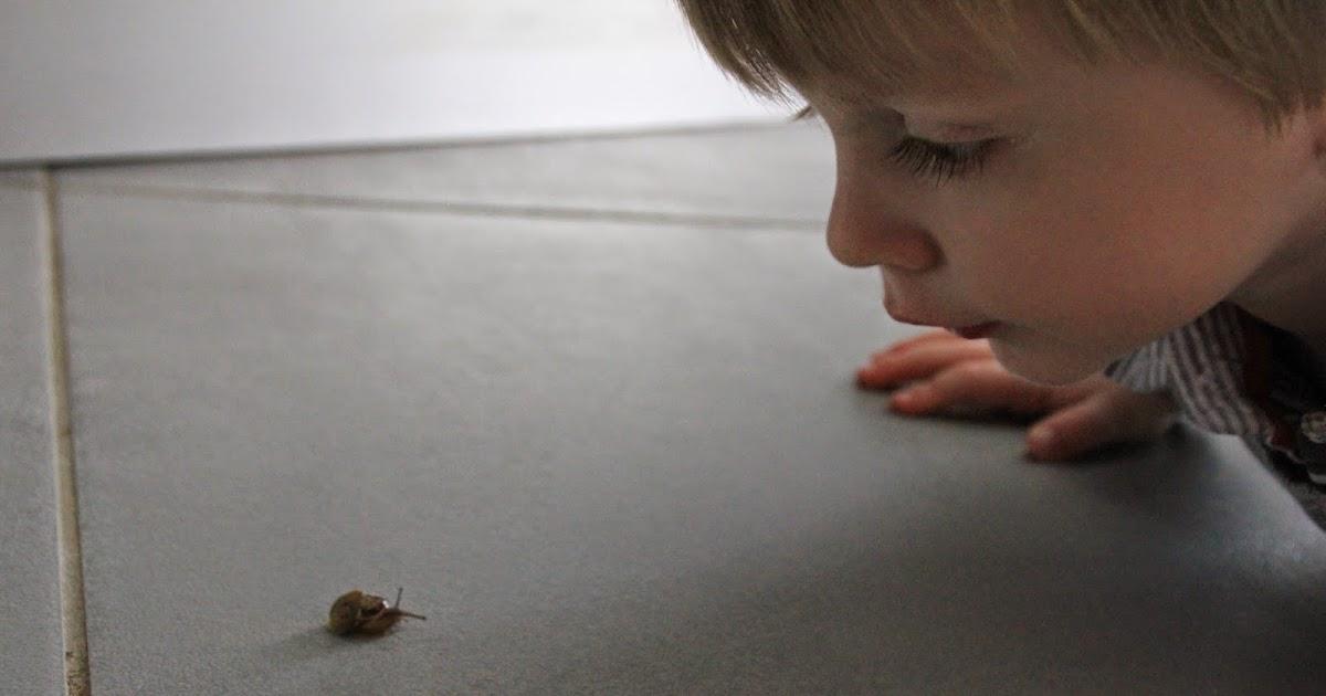 Les champignons les parasites sur la nourriture