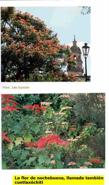 Imagenes De Todas Las Flores Con Sus Nombres - LAS 100 FLORES MÁS BELLAS Mi Jardín