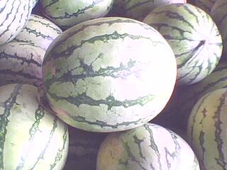 http://1.bp.blogspot.com/-z_owa9Fs6OQ/T2V3tCt7dyI/AAAAAAAAALk/ztMvqjoYH70/s1600/Water+melon+with+seed.jpg