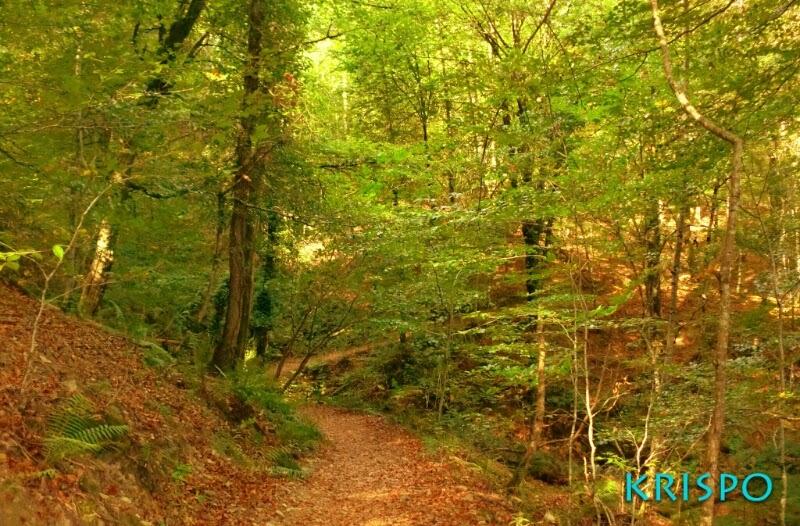 sendero y arboles en monte en otoño
