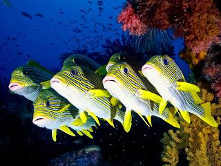 Peces maravillosos del fondo del mar