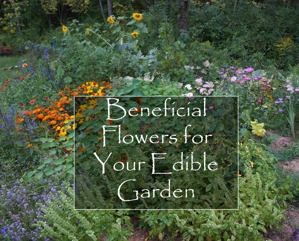 The Backyard Farming Connection Beneficial Flowers For Your Edible Garden