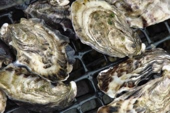 http://www.theaustralian.com.au/life/food-wine/ewan-mcash-on-clyde-river-and-the-oyster-boys-are-challenging-tradition/story-e6frg8jo-1227290019351?sv=3807a58dda4be56acdeb81aca022d809