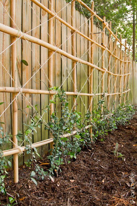 trelica bambu jardim : trelica bambu jardim:Treliça de bambu rente a cerca ou muro ,formando uma parede de