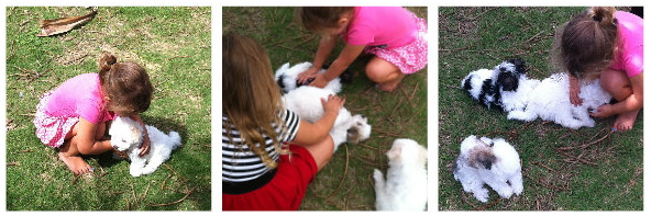 Maltese cross puppies, girls playing with puppies, puppies