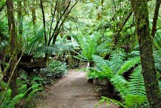 Great Otway National Park Australia