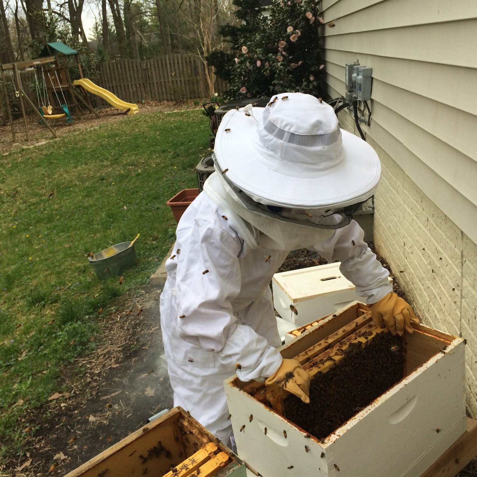 bee happy garden colony collapse disorder and backyard beekeeping