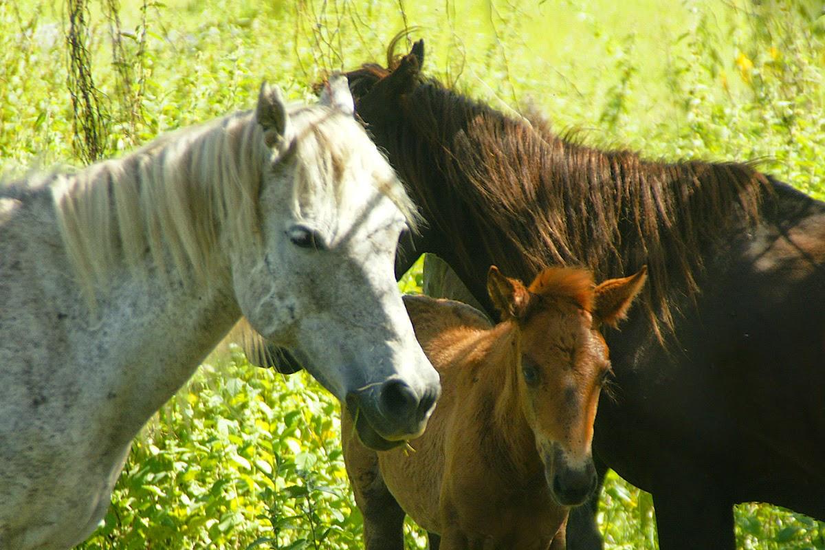 http://tipspetani.blogspot.com/2014/12/perawatan-kuda-lagi-bunting.html
