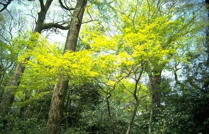 Citaten Over Bomen : Spirituele vrienden over takken en bomen