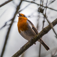 If only the finest birds in the forest dared sing, how quiet the forest would be.