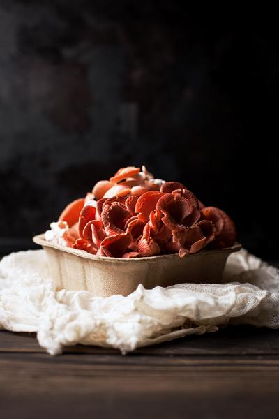 Pink Oyster Mushrooms